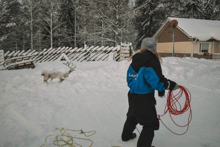 A fun plastic reindeer experience in Lapland