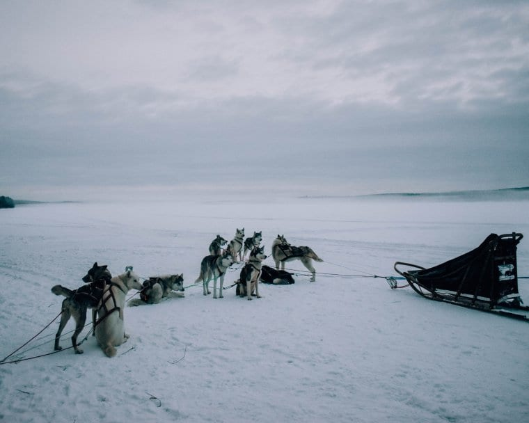The best husky adventures in Lapland