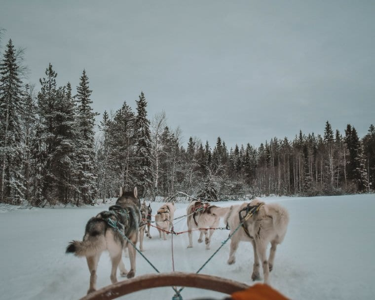 The best Lapland adventures, sleigh riding in Finland