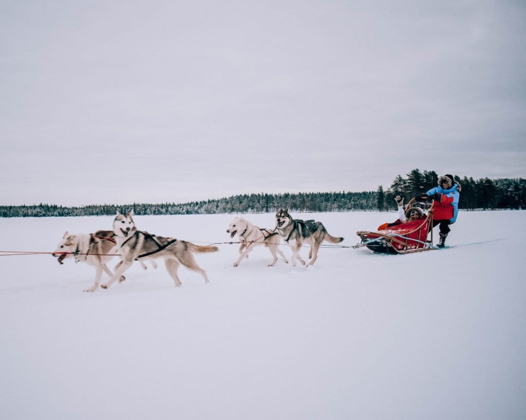 Two women sleigh riding with huskies in Finland