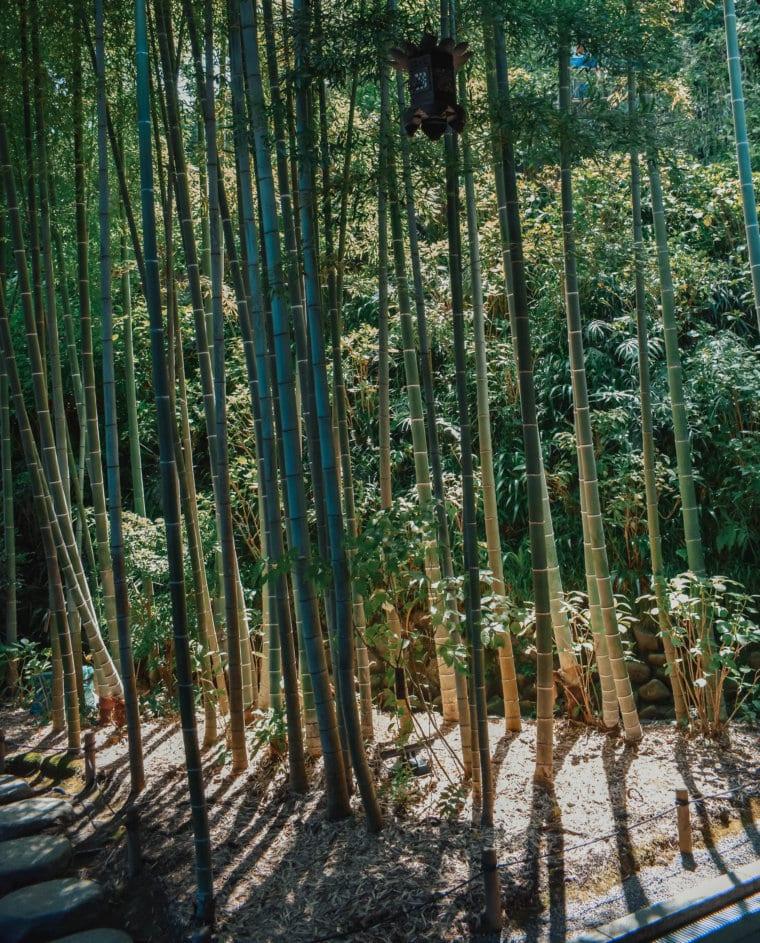 Day Trip to Kamakura, Japan from Tokyo