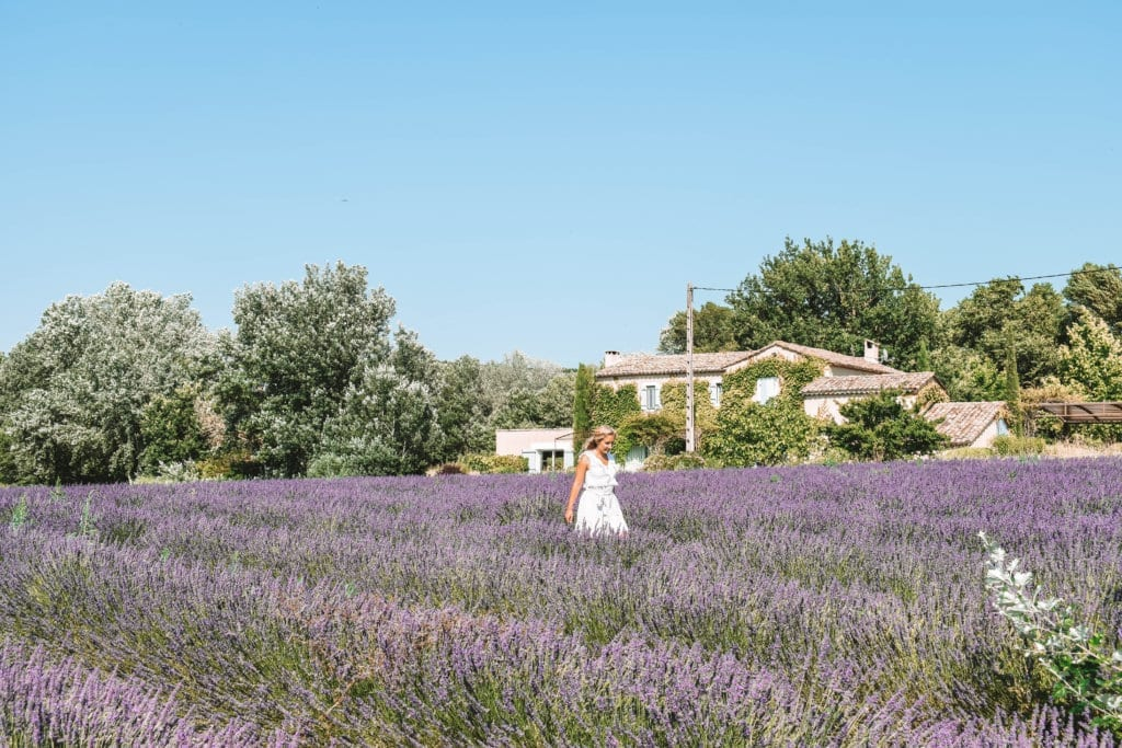 A woman walking through the lavender fields in the South of France