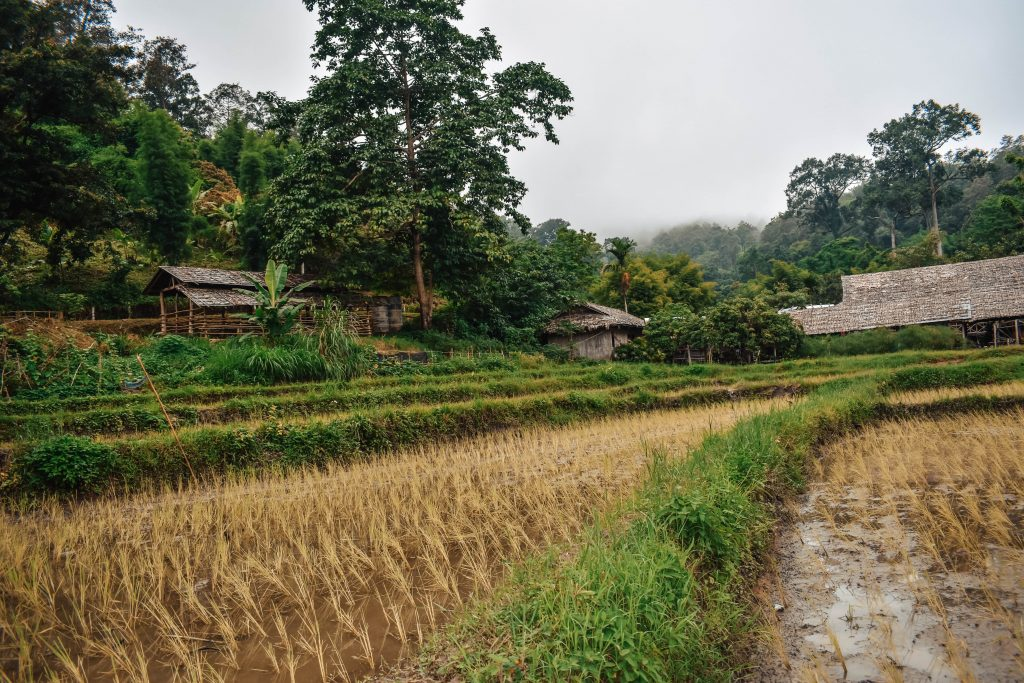 Rice terraces in Northern Thailand