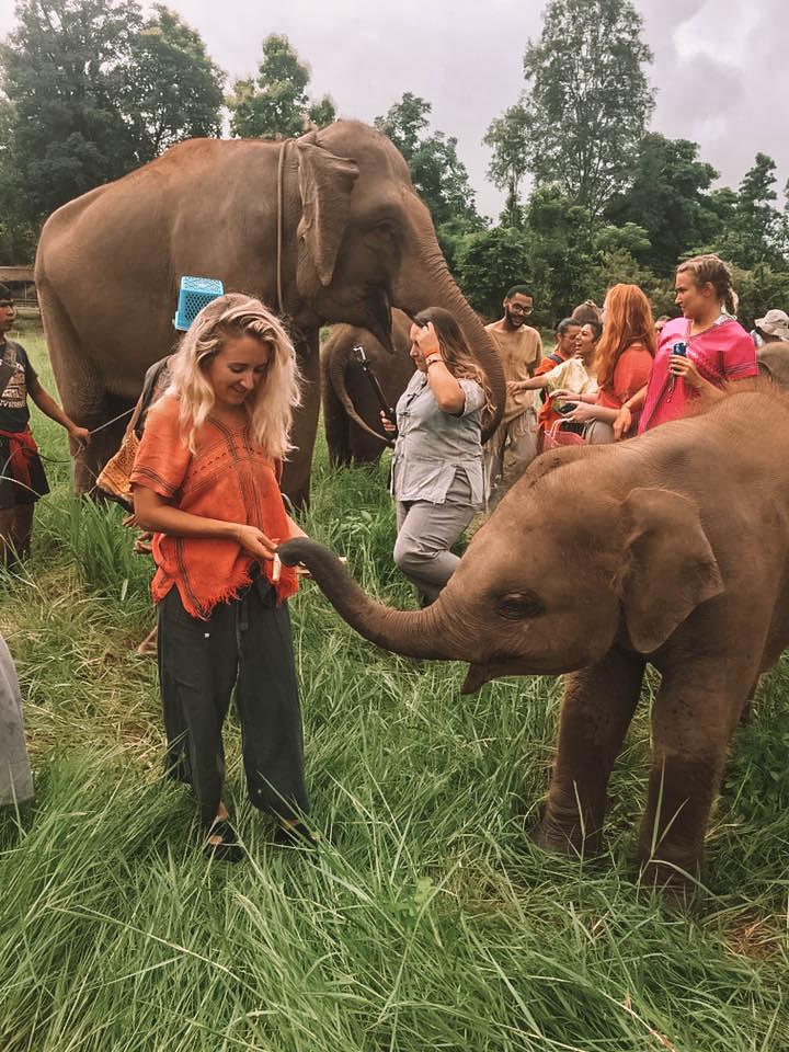 A woman feeding a baby elephant