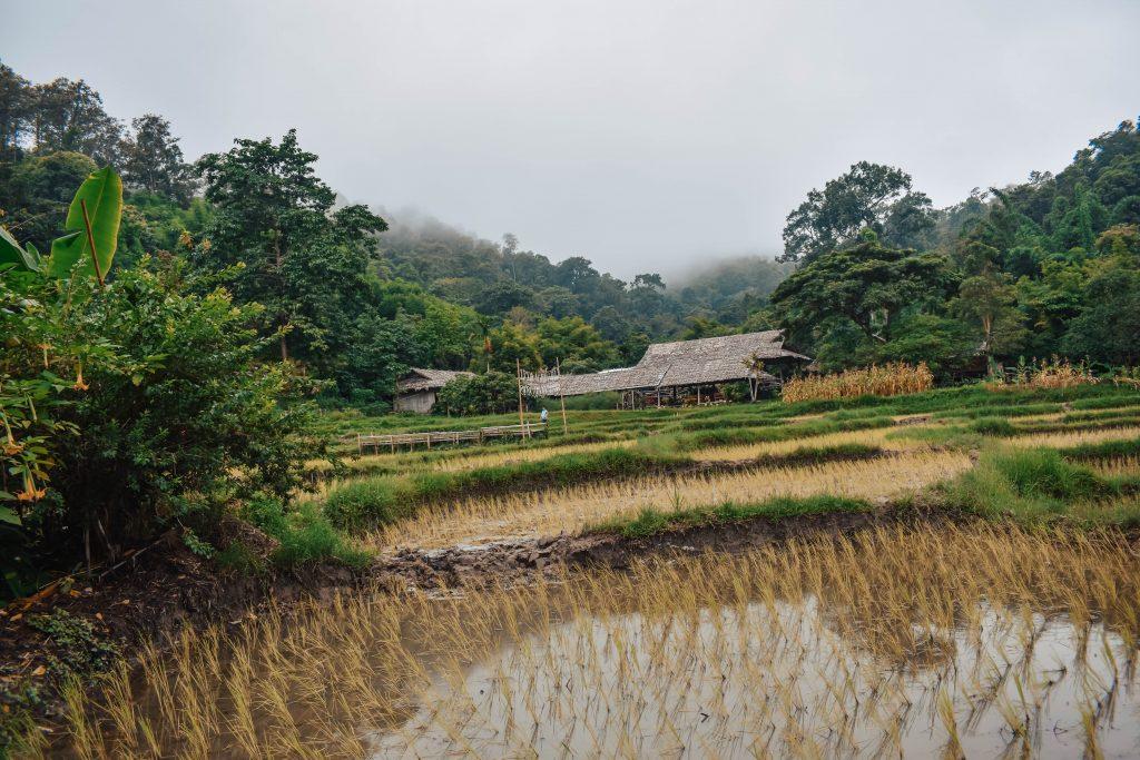 Beautiful rice terraces in Chiang Mai