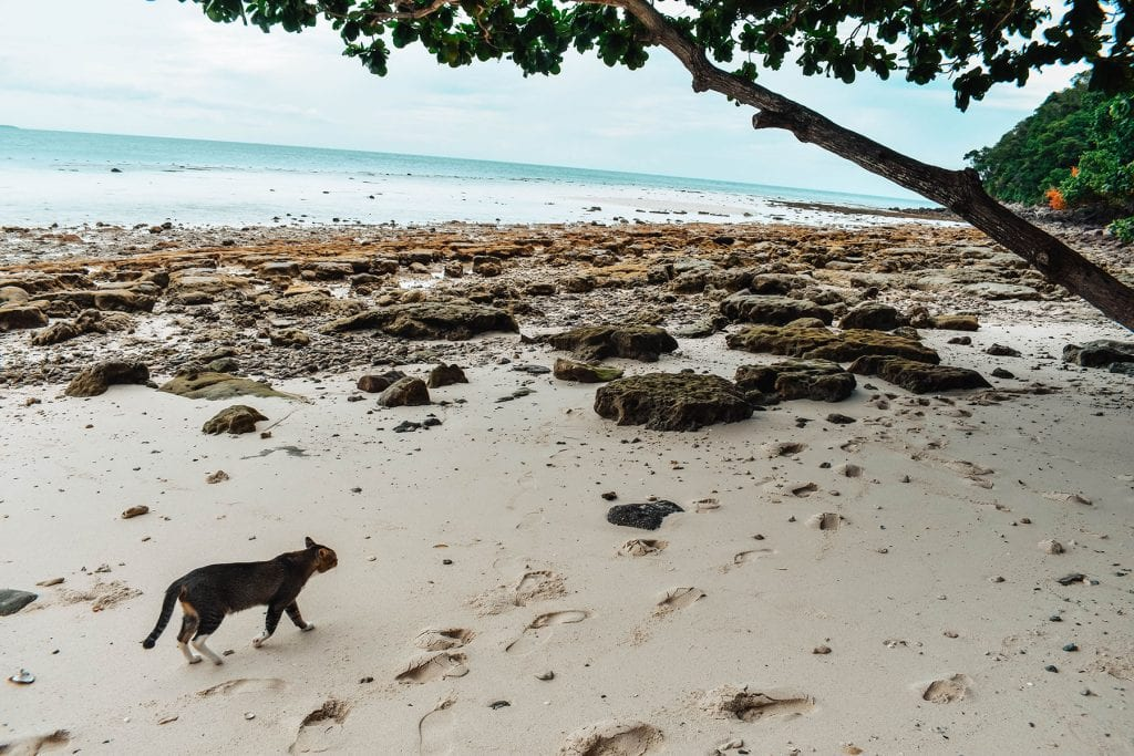 A cat roaming the island of Koh Samet, Thailand