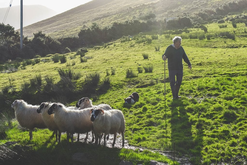 The Kells Sheepdog Experience in the Irish countryside