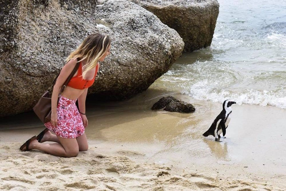 A young woman looking at penguins on a solo female travel journey in South Africa.