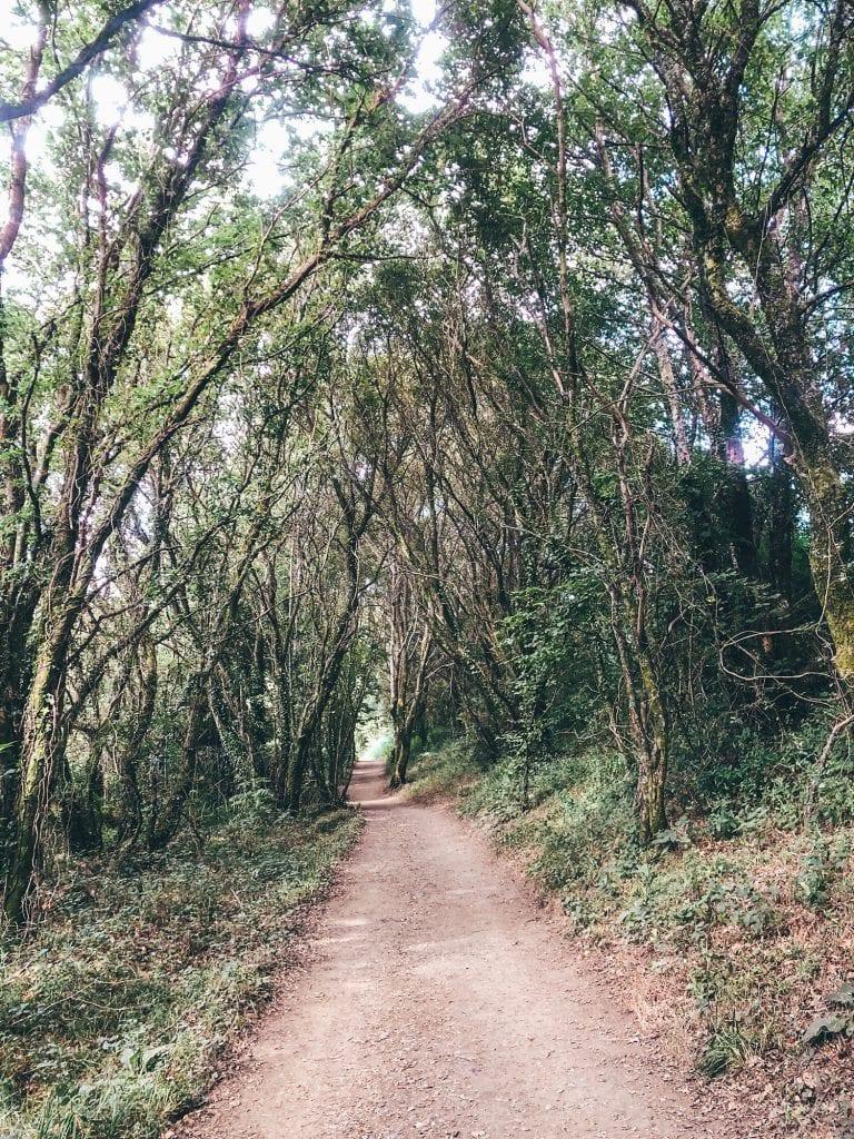 Woodland paths along the Camino de Santiago route