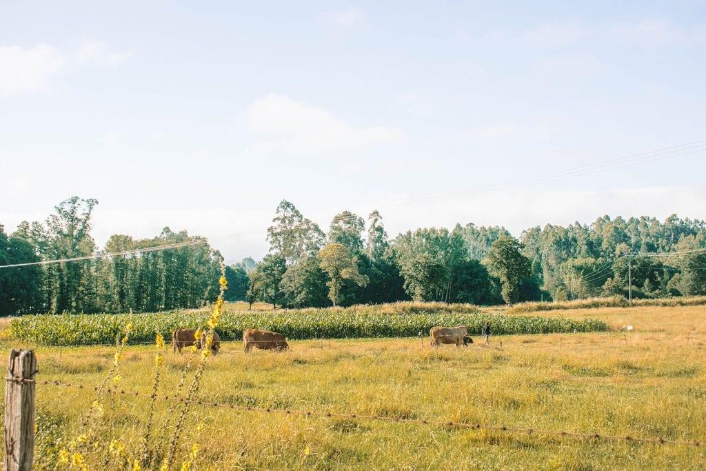 Farmlife along the Camino de Santiago route