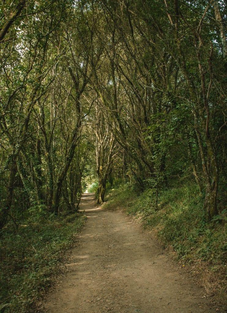 Beautiful hiking trails along the Camino de Santiago route
