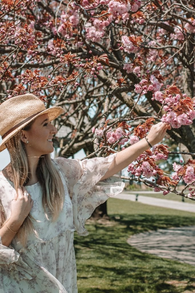 A woman admiring the cherry blossoms