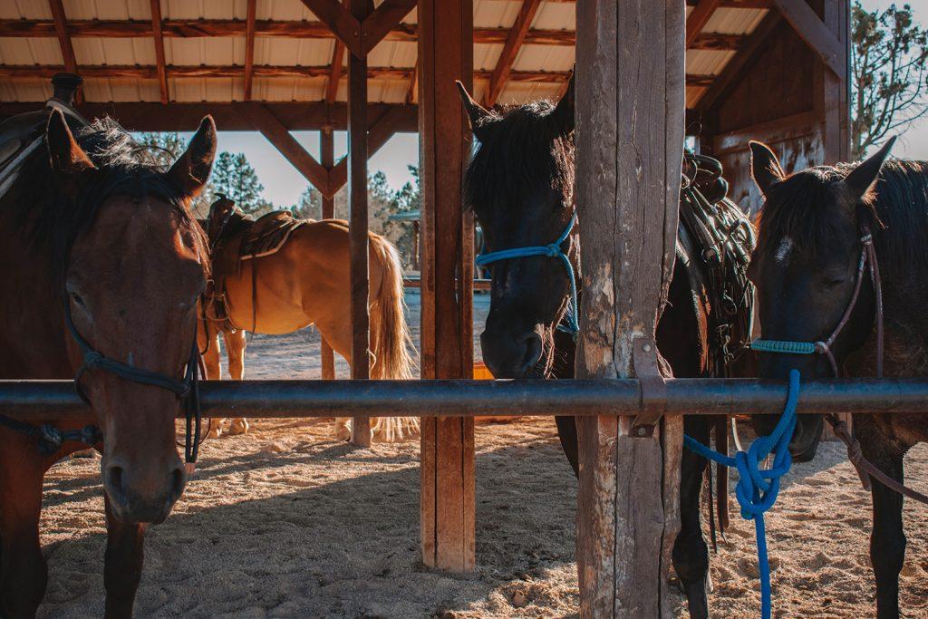 Beautiful horses from Zion Ponderosa Ranch Resort