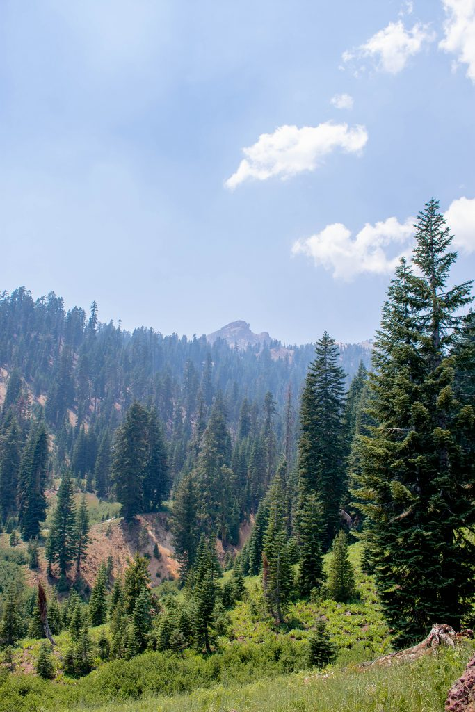 Beautiful tree views in Lassen Volcanic National Park