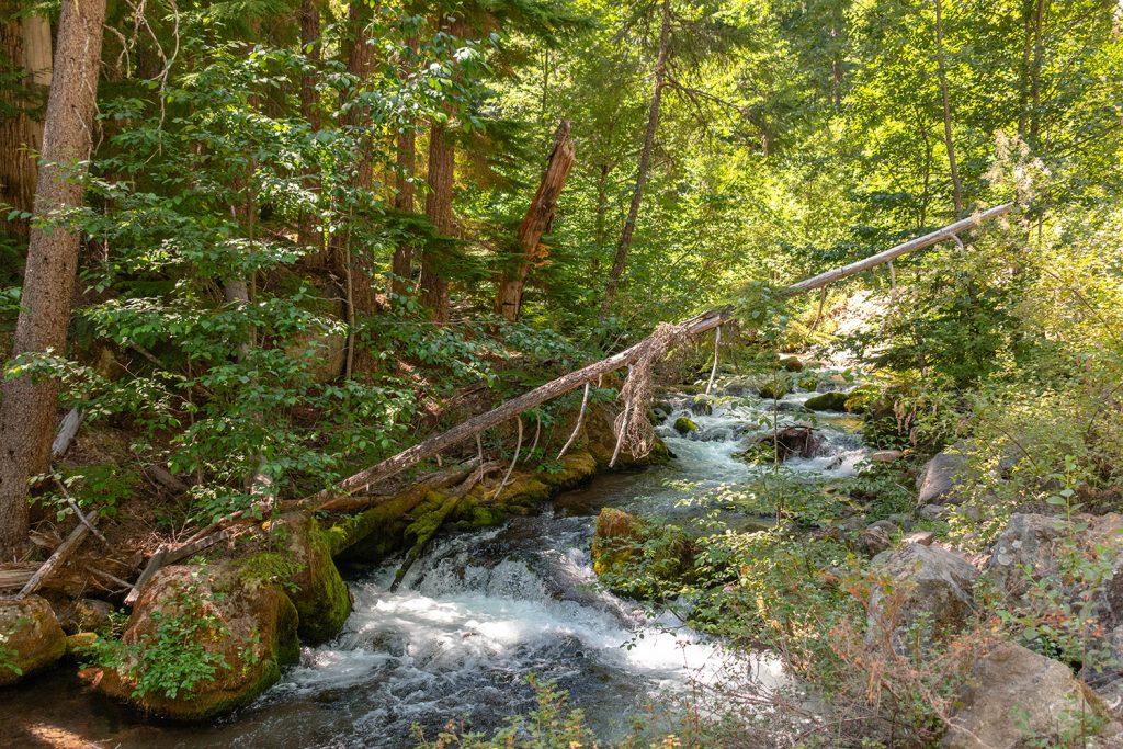 The hiking trails at Tamanwas Falls at Mount Hood