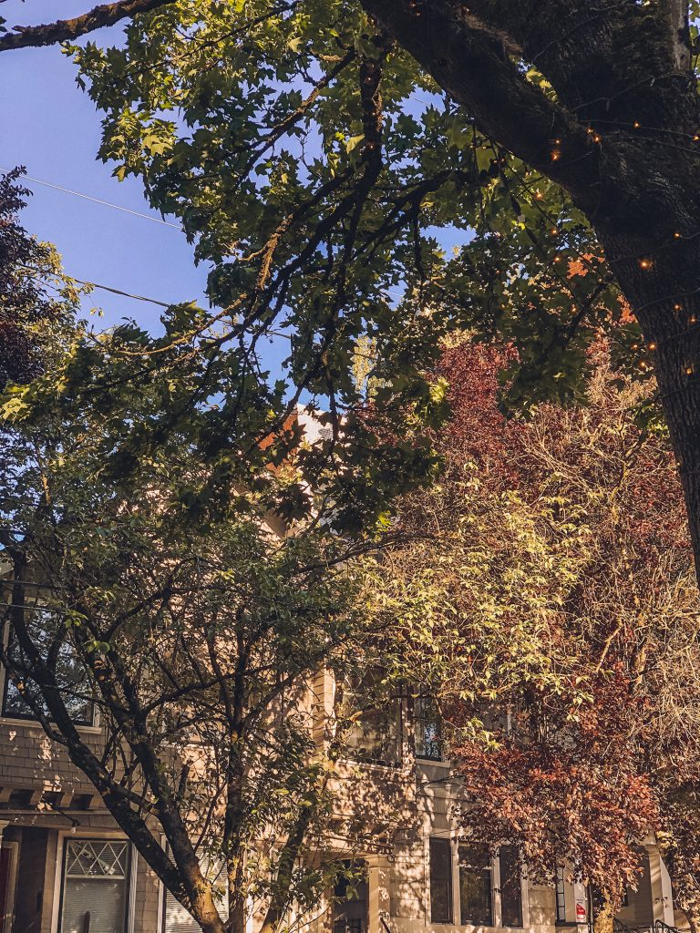 Early fall foliage in Portland, Oregon