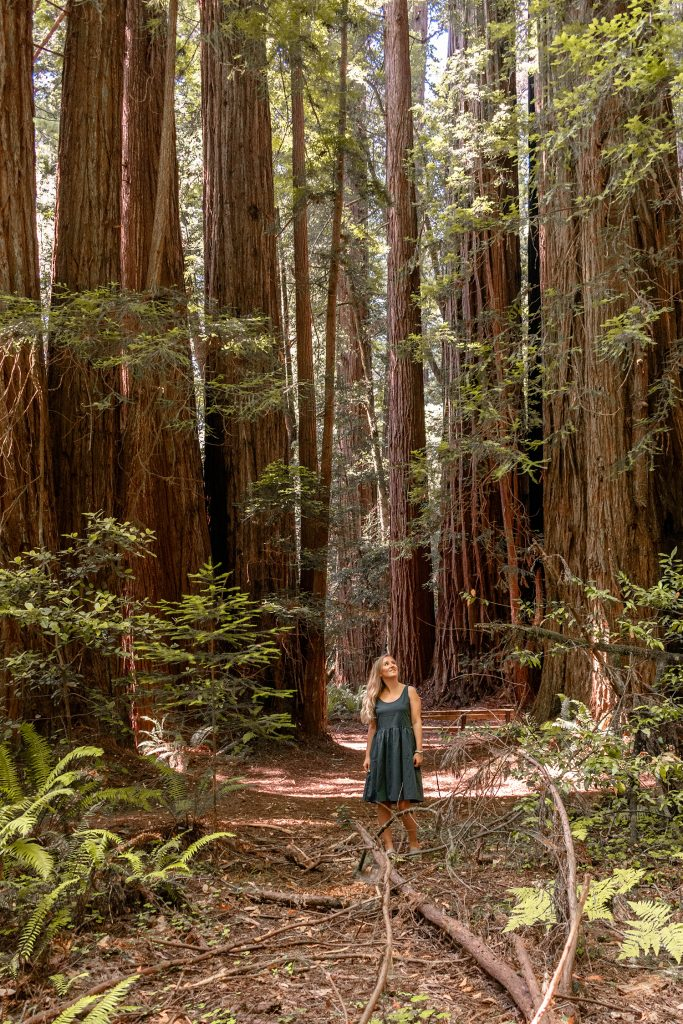 A woman exploring the Redwoods on a Northern California and Oregon road trip