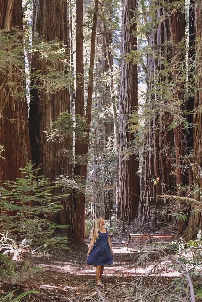 A woman wandering through the Redwoods Forest in Northern California