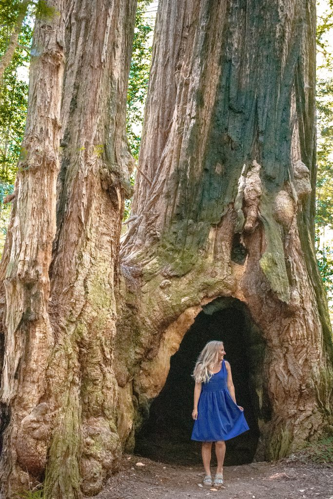 A woman standing outside a tree hollow in the Redwoods
