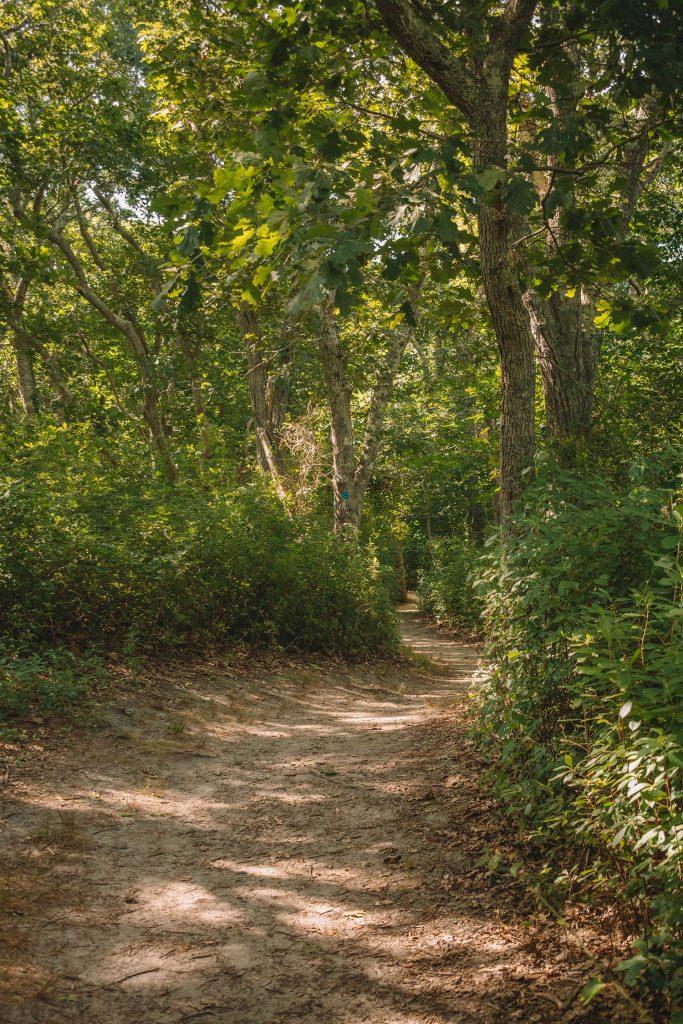 Woodland trails at Great Rock Bight Preserve