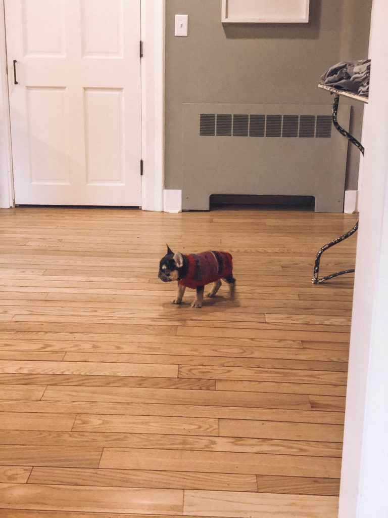 A little dog at The Bond 1835, a pet friendly bed and breakfast in the Finger Lakes