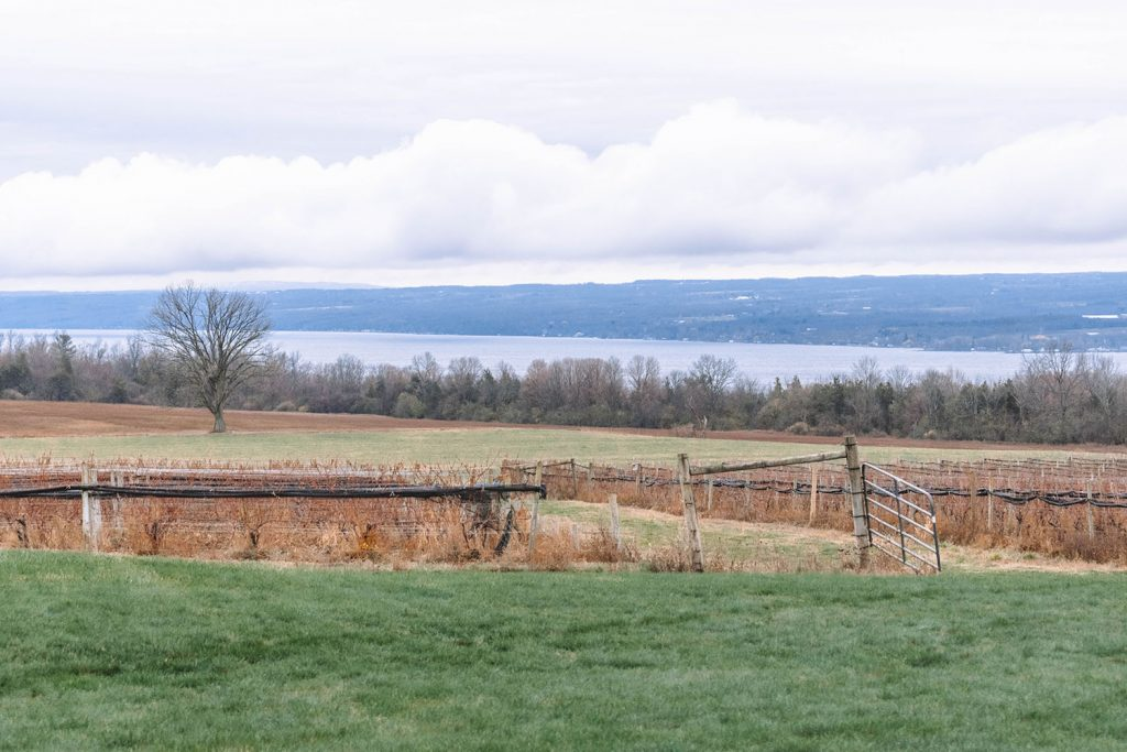 A vineyard in the Finger Lakes
