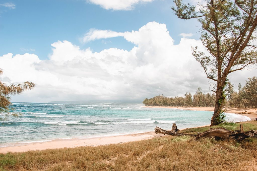 Horseback riding trails on the North Shore
