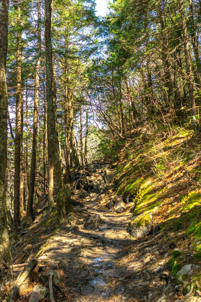 Sweat Heifer and Newfound Gap trail during 3 days in Great Smoky Mountains