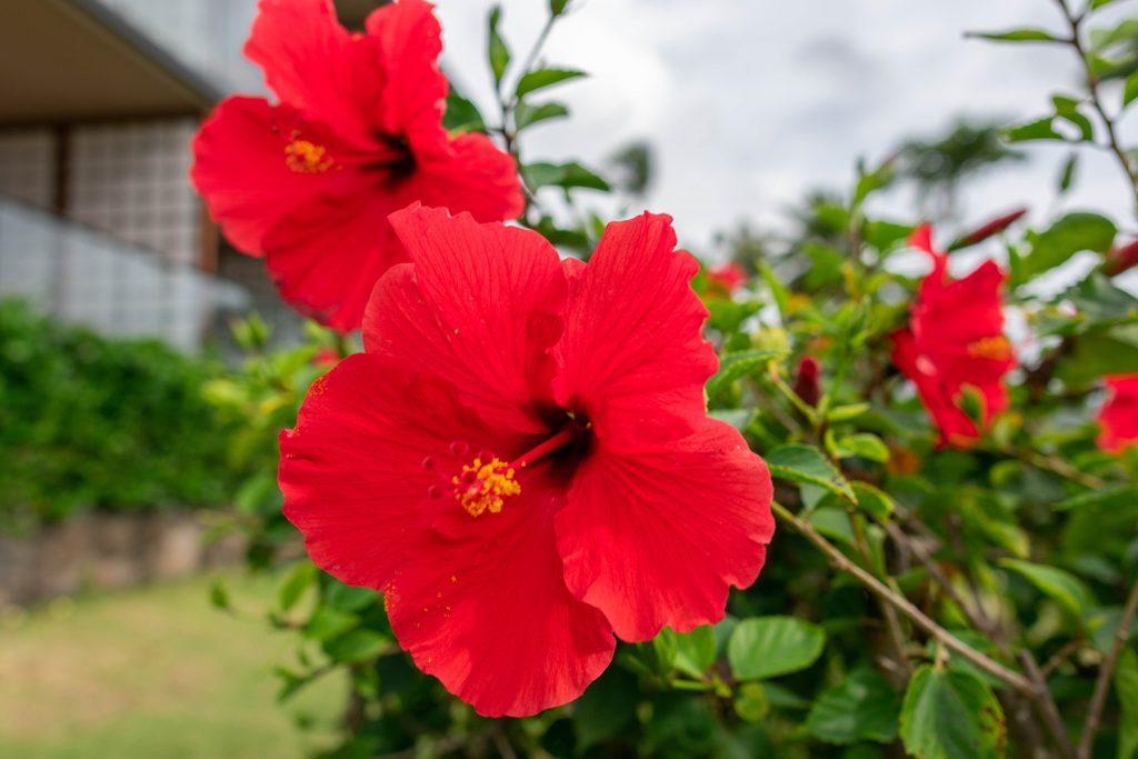 A Hawaiian flower