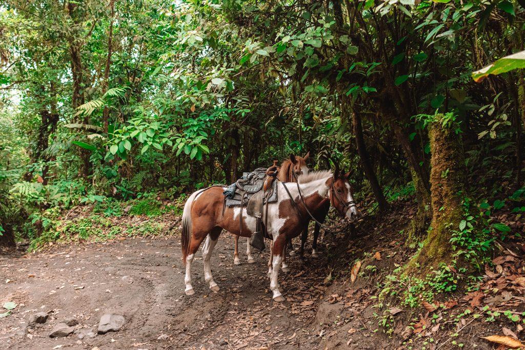 Horses at Arenal Volcano National Park