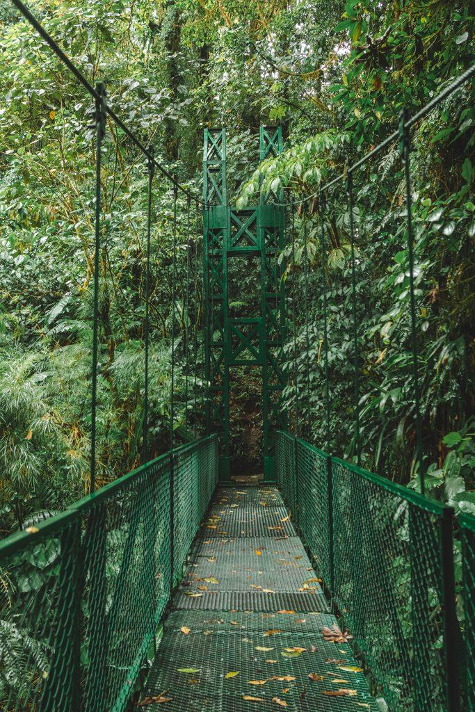 A suspension bridge at Selvature Park in Costa Rica's cloud forest