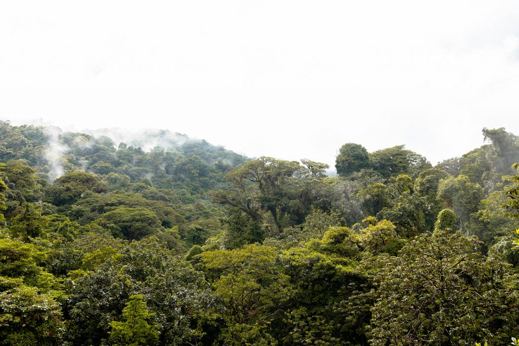 The cloud forest of Costa Rica