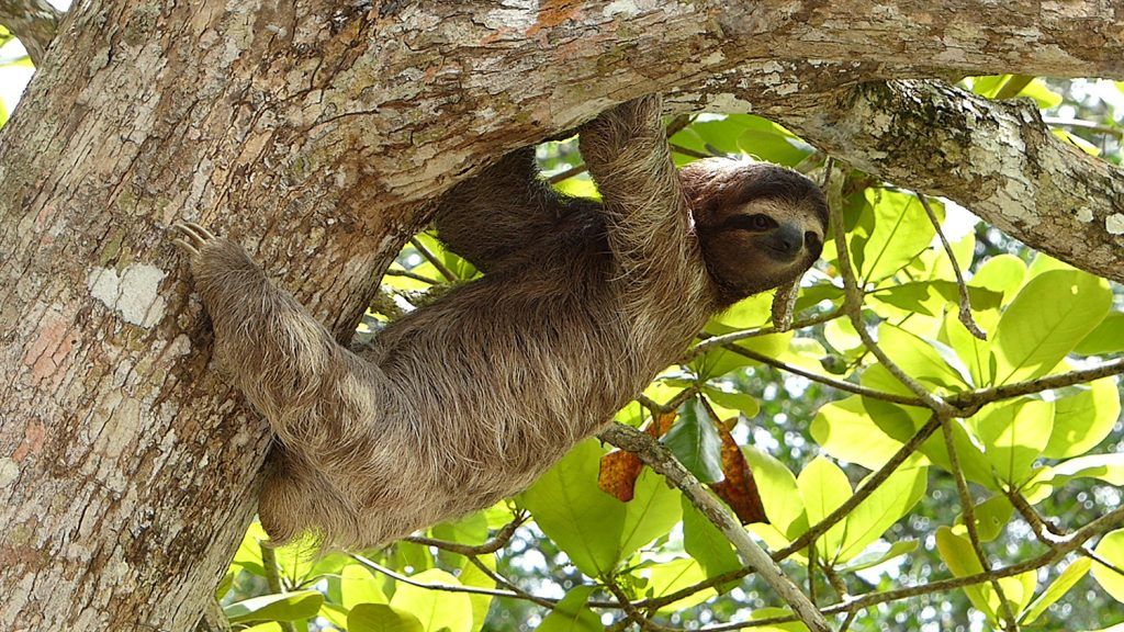 Visit a sloth sanctuary during your 2 days in Monteverde, Costa Rica