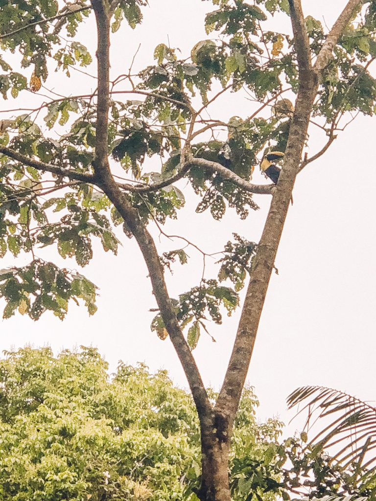 A toucan in Arenal Volcano National Park