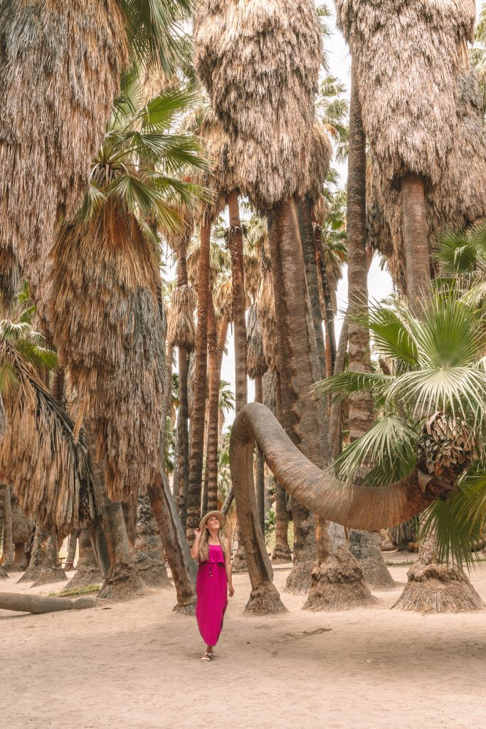 A woman at Palm Canyon Oasis in Indian Canyon during a girls' trip to Palm Springs