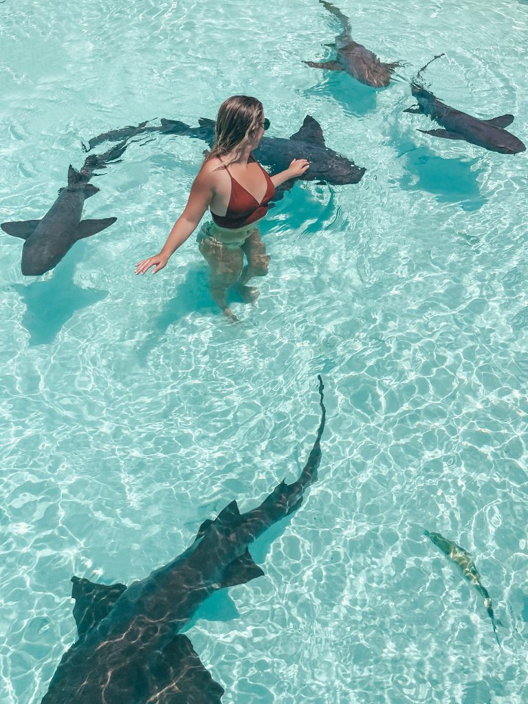 A woman swimming with the sharks on a boat tour from Staniel Cay in Exuma, Bahamas